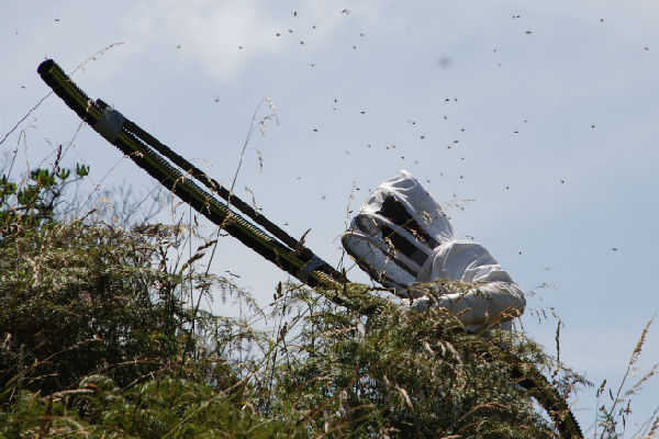 WASP BUSTER: John Eason removes wasps from a nest in Queen Elizabeth Park using a suction tube.