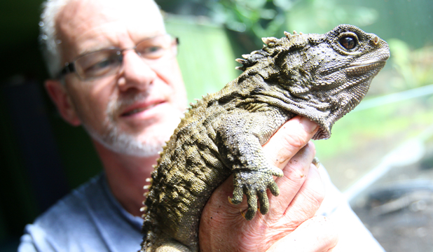 Fears Henry The Tuatara Might Be Infertile
