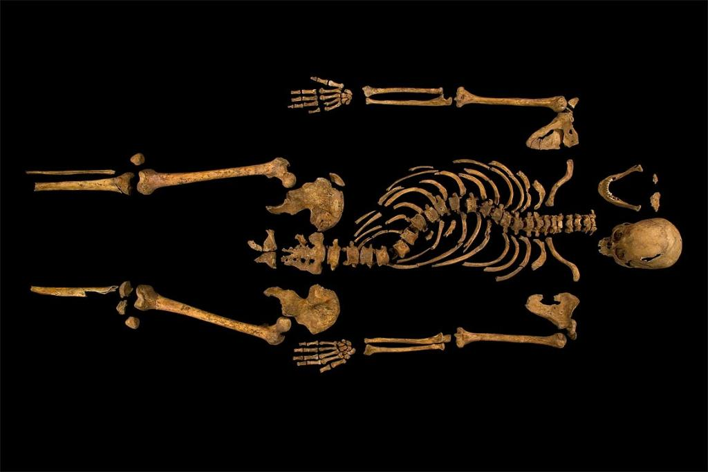 The skeleton of King Richard III.