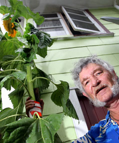 Jimmy Hogg and this three-metre-high sunflower.