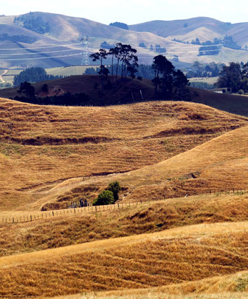 PARCHED: Waikato pastures have been drying out, like the hills around Scotsman valley.
