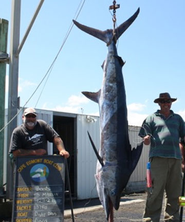 Heavy weight: A six-year marlin drought for the Cape Egmont Boat Club has ended with this 129.2 kilogram beauty.