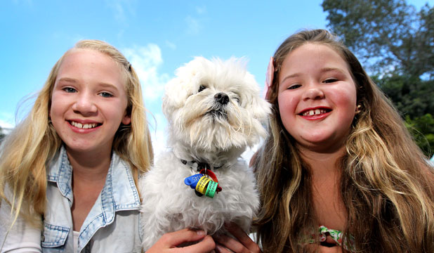 "Percy the Maltese is reunited with two of his ''family"", Emily-Rose Longstaff, 12, left, and Sophia Longstaff, 9."