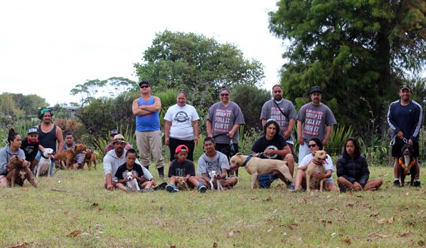 DOG PACK: The Auckland Endurance Dog Association meets weekly for training in Mangere Bridge.