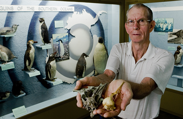 Amateur fossil hunter Al Mannering, who discovered the skull of the world's oldest penguin, left, which is shown compared with a modern penguin.