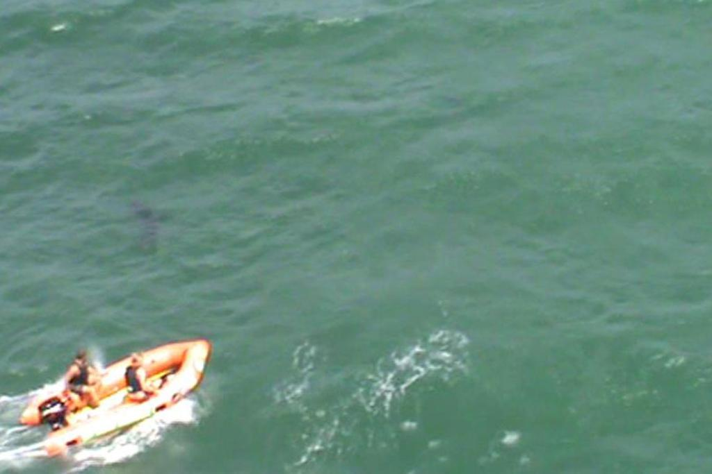 A surf lifesaving boat chases away a shark following the death of a man in the water at Muriwai Beach.