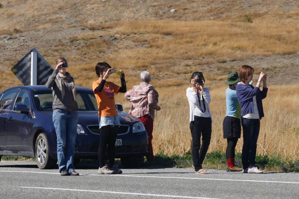 SIGHT TO SEE: Tourists stop to watch the flock of ewes being droved to the Tekapo saleyards.