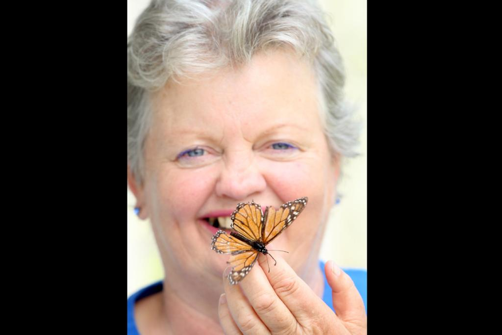 HELPING HAND:  Butterfly lady Jacqui Knight says the monarch needs help if it is to remain a feature of New Zealand gardens.
