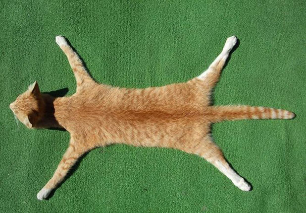 Taxidermist Andrew Lancaster is auctioning off a cat-skin rug on Trade Me.