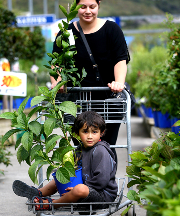 FORBIDDEN FRUIT: Sarah Samuels and Desire Wilson, 4, took advantage of Oderings Nurseries' Upper Hutt outlet opening yesterday. The garden centre breached the law by trading on Good Friday.