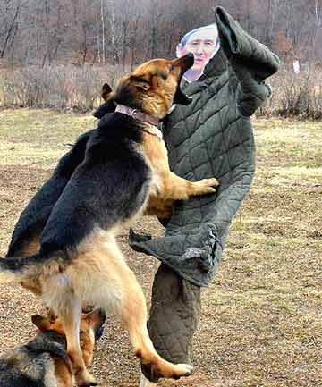 North Korean military dogs attack a dummy of South Korean Defence Minister Kim Kwan-jin during a military drill in an unknown location in this picture taken on April 6, 2013 and released by North Korea's official KCNA news agency in Pyongyang.