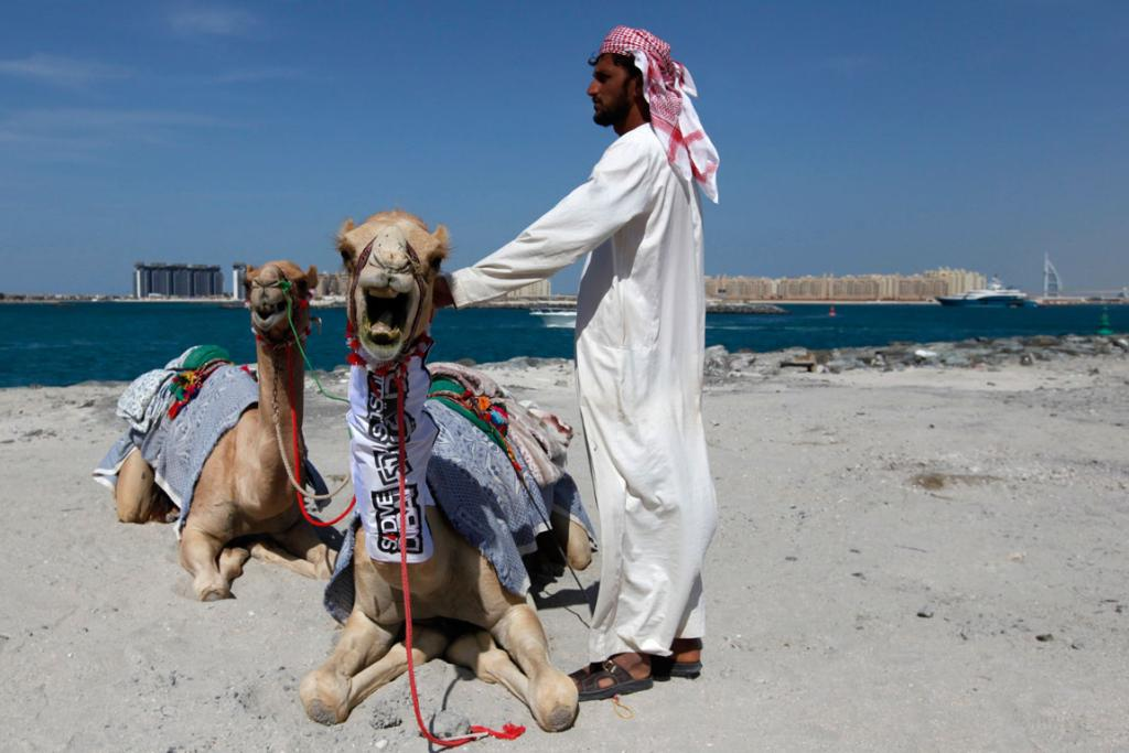 A camel trainer stands with his camels near the Dubai Marina.