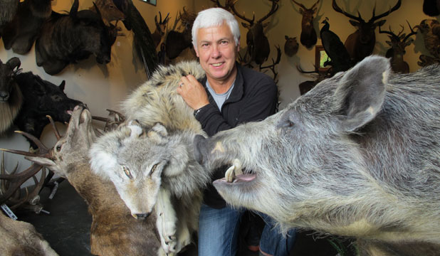 Taxidermist Vern Pearson, of Taupo, has turned his hobby into a fulltime career, with much of his business coming in from overseas customers.