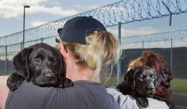 Inmates at Christchurch Women's Prison with the two puppies they are helping train to search for drugs and other banned items