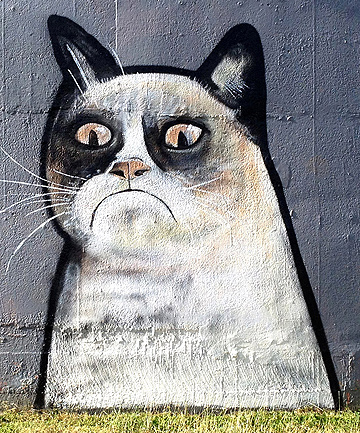 CELEBRITY CAT: The grumpy cat graffiti gained fans around the globe due to its similarity to kitty internet celebrity Tardar Sauce.
