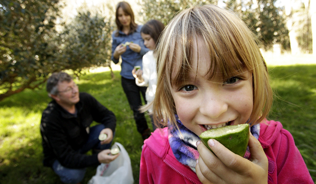 TASTY: Feijoa growers Lee-Anne and Mike Stone with their daughters, Emily, 10, and Teresa, 5, in the foreground.