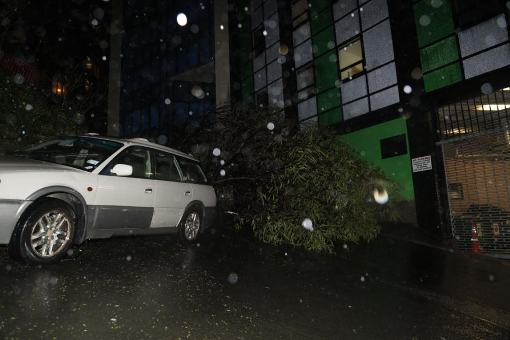 A tree which blew over at the back of a student accommodation building on Boulcott St, narrowly missing a car.