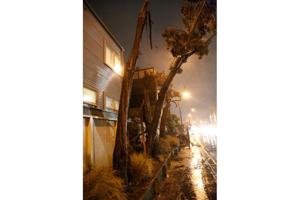 Trees broken by the storm on Victoria St in central Wellington.