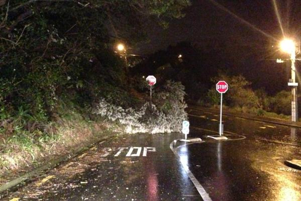 A tree lies fallen across Fox St at the intersection with Awarua Rd, Ngaio.