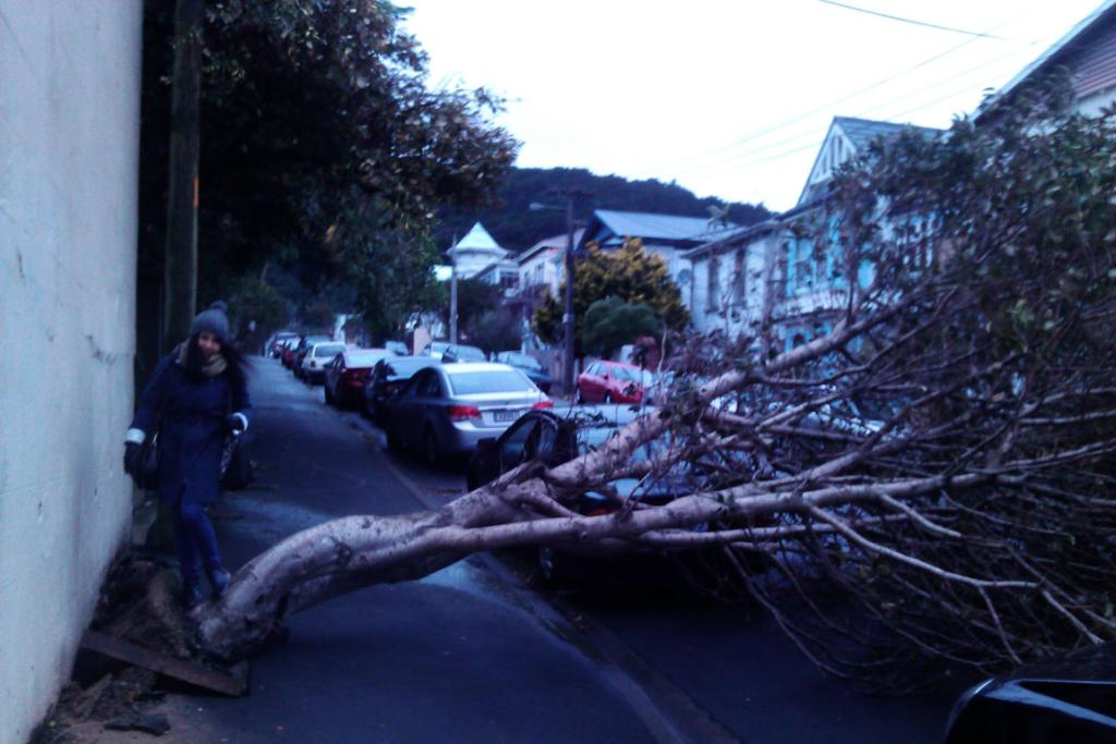 A fallen tree on Ellice Street, which thankfully fell between two cars.