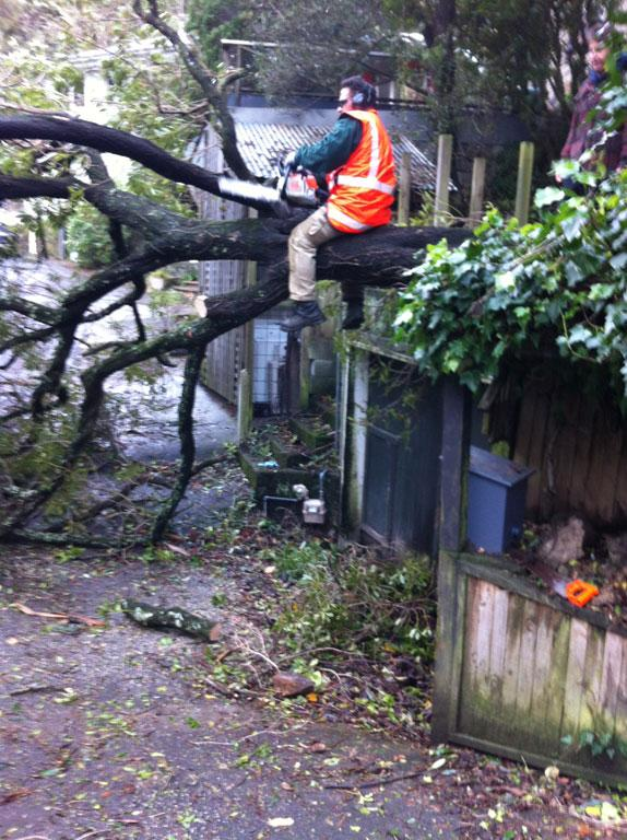 Council workers deal with a fallen tree on Rangiora Ave.