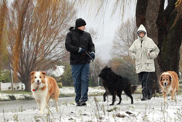 Walking dogs in the snow