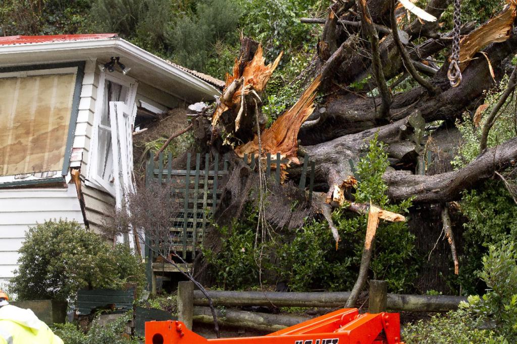 Contractors start to remove a large tree from an Owhiro Rd home.