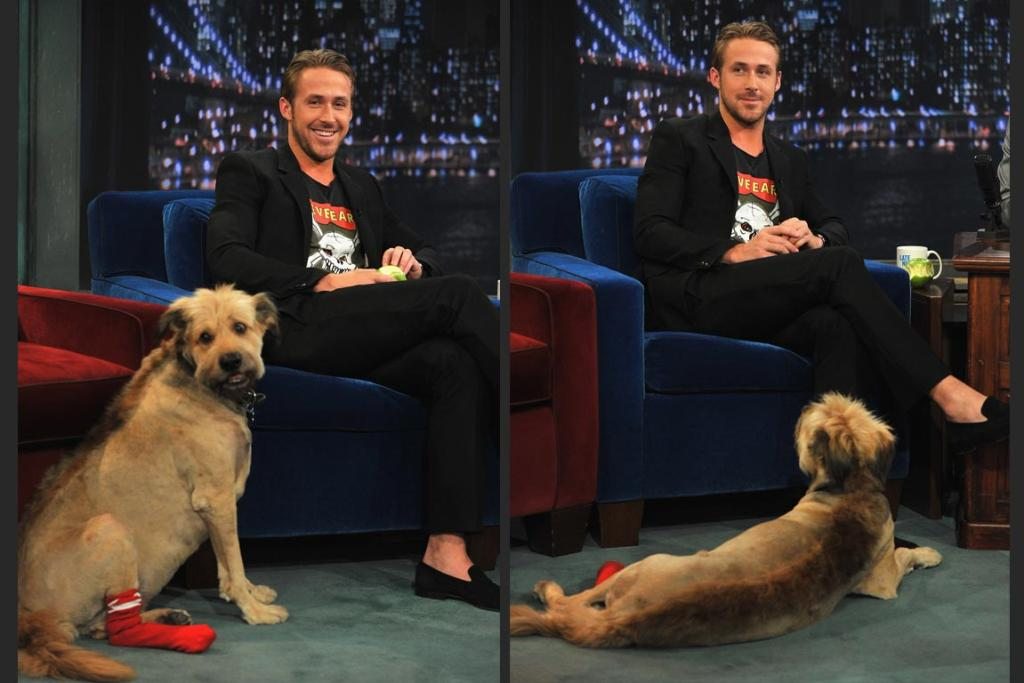 Actor Ryan Gosling with his dog George.
