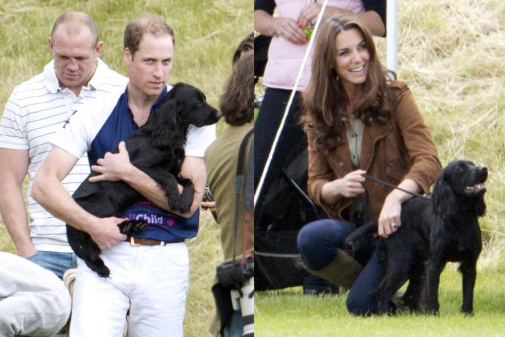 Wills and Kate's dog Lupo.