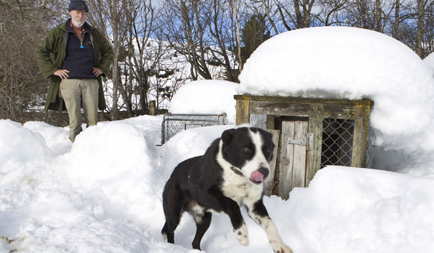 COLD RUN: Pete Turnbull lets farm dog Cruise out of the kennel for a run in the snow.