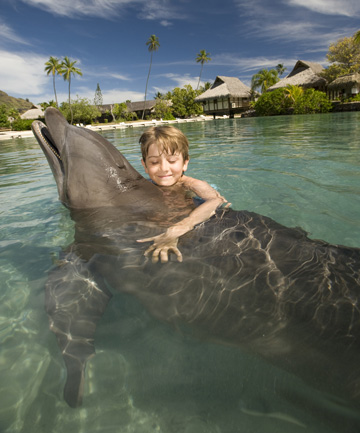 WATER SPORTS: Swimming with the dolphins at Moorea Dolphin Centre.