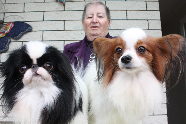 4abf6c4895c Pint-sized pals: Nora Jones with her Japanese Chin Shaker and Papillon Dora,