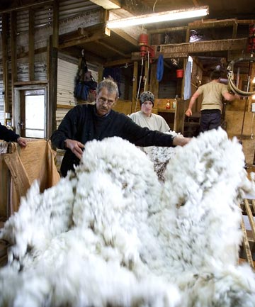TOUGH MARKET: Wool is struggling to compete with synthetics and prices are abysmally low.