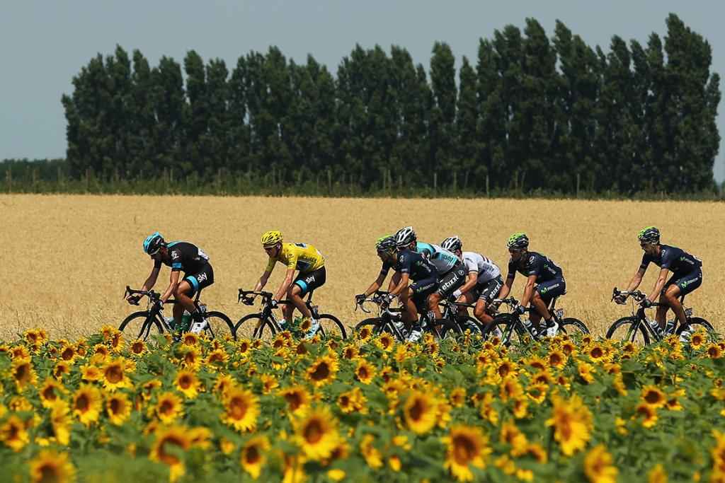 The peloton rides past a field of sunflowers during stage 15 of the 2013 Tour de France, a 242.5km road stage from Givors to Mont Ventoux.