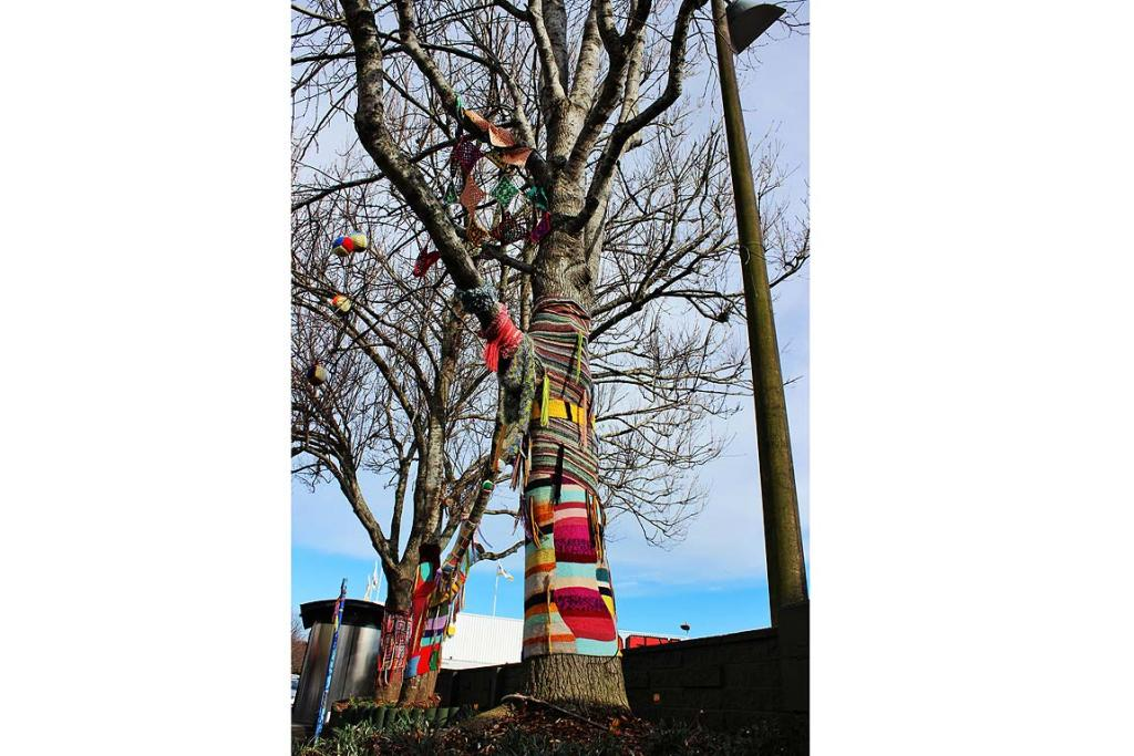 Yarn bombed: Three Mt Albert trees have been given the graffiti knitting treatment.
