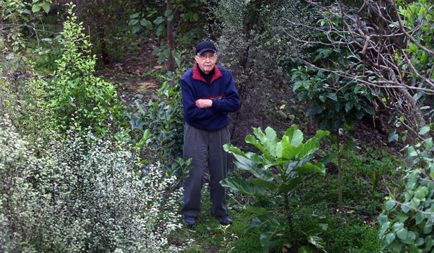 GREEN FINGERS: Waikanae resident David Blomfield is surrounded by native trees  he has  planted beside the Waikanae River. The Kapiti Coast District Council wants to remove some of them, including the puka, front right, which is deemed non-local.