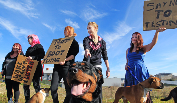 timaru animal drug test protest