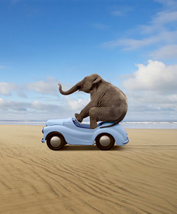 car racing elephant