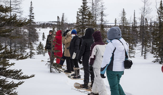 SNOW STEPS: Snowshoeing is one of the many cold-weather activities in the area around Churchill in Manitoba, Canada.