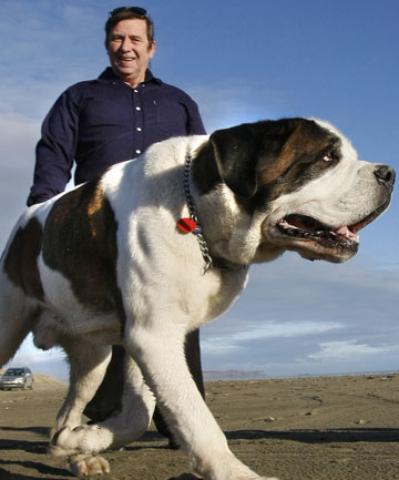 BLAME: David Milton, pictured here in 2009 with his dog Clifford, is angry at Southland Hospital's lack of effort in helping his wife Sucharitta.