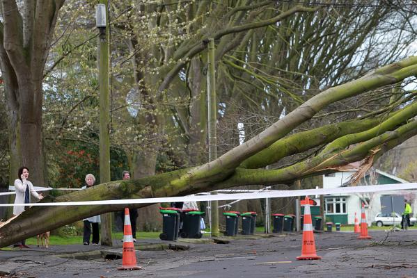 Tree down in Christchurch