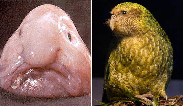 Blobfish and Kakapo
