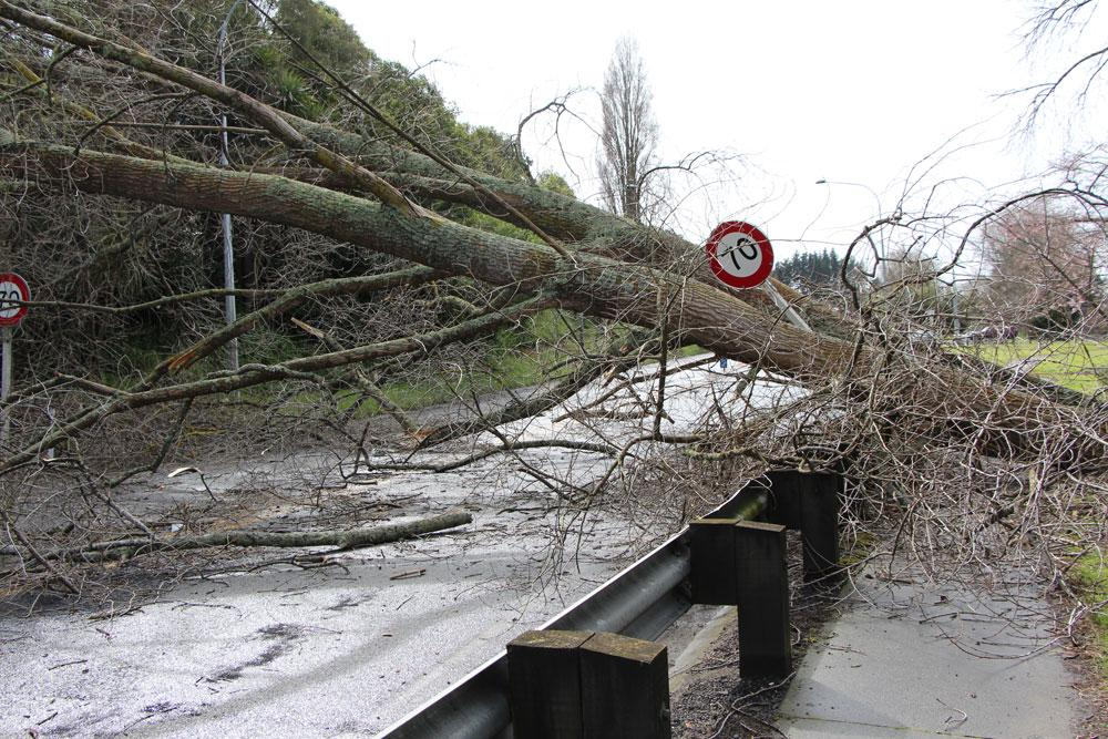 The tree crashed across SH 1 at the town's lower bridge near the entry point to Leamington.