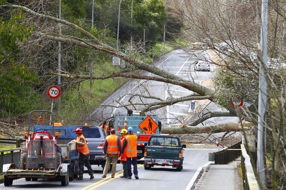 A mother and child narrowly avoided injury when the tree fell on their car.