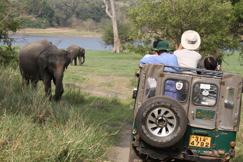 SRI LANKA: The Southeast Asian country has its own 'Big Five': Asian elephants, leopards, sloth bears, blue whales and sperm whales.
