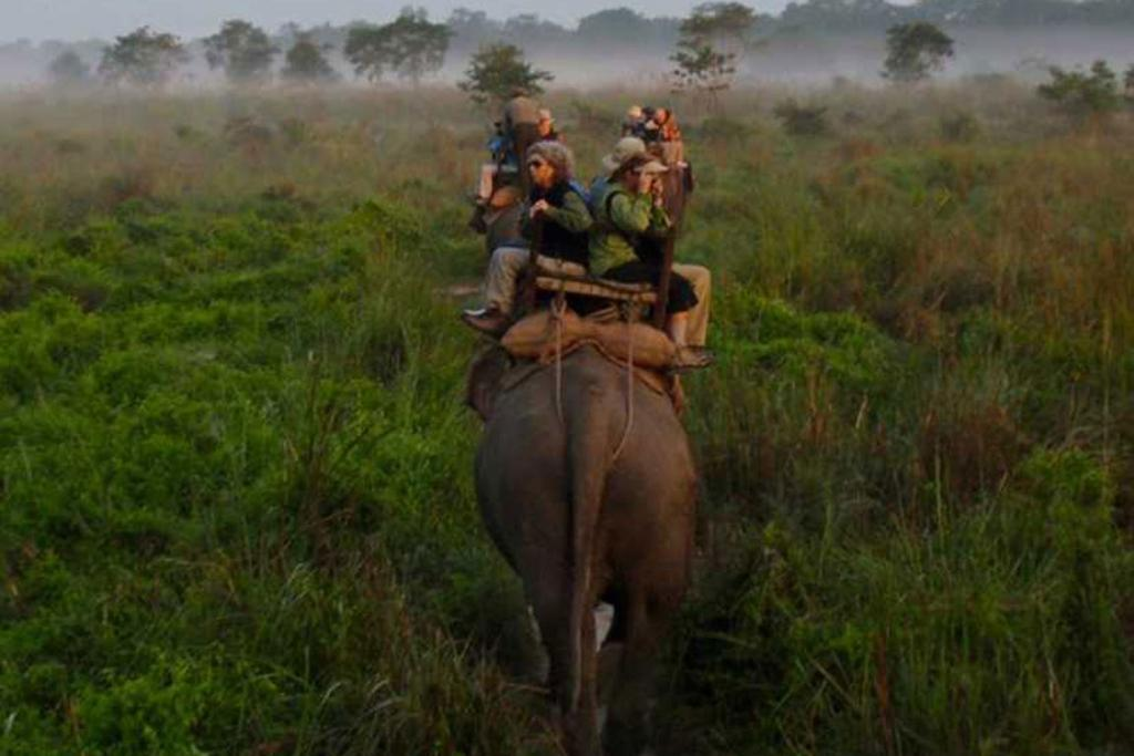 NEPAL: The Nepalese jungle, known as the Terai, is a subtropical forest that's chock full of rhinos, elephants, and more.