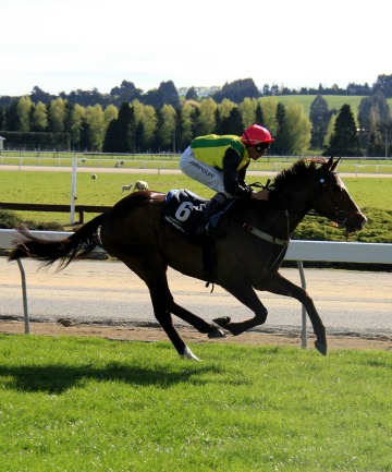 IMPRESSIVE: The Diamond One (Chris Johnson) wins the AON Insurance Brokers' Handicap at Gore today.