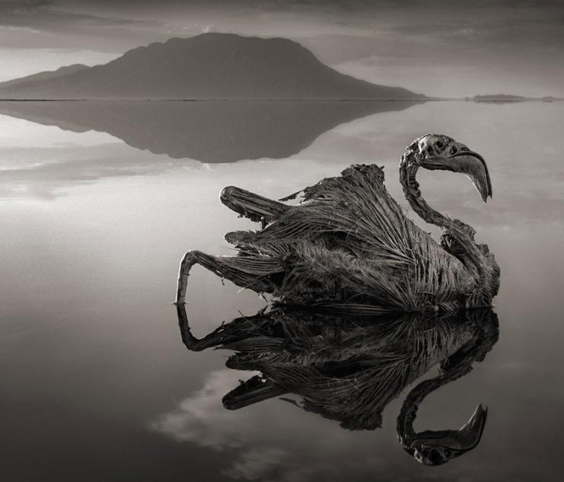 Petrified creatures pepper the area around this lake in Tanzania.