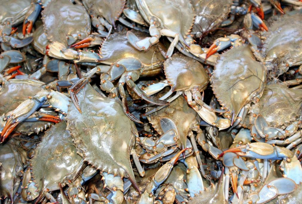 Got crabs? One of the best places to buy fresh fish on Long Island, NY is on the docks in the town of Freeport. You can walk the Nautical Mile and visit the many restaurants, bars, gift shops and fresh fish markets.