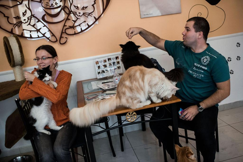 Customers interact with cats in the Cat Café Budapest.